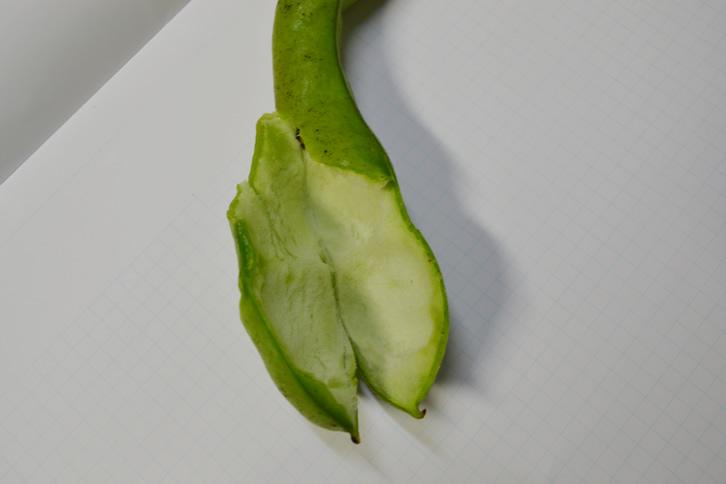 蚕豆のクッション